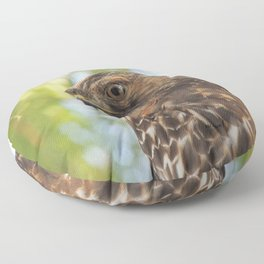 Young Red-Shouldered Hawk in a Desert Willow Floor Pillow