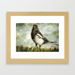 Message from the Magpie Framed Art Print