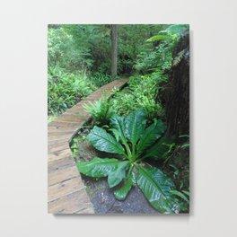 Temperate Rainforest Trail Metal Print