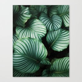 All about Leaves Canvas Print