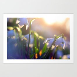Snow Drops Art Print