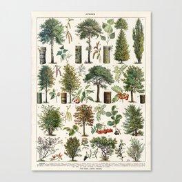 Adolphe Millot - Arbres B - French vintage botanical poster Canvas Print