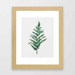 Bedraggled Fern Framed Art Print