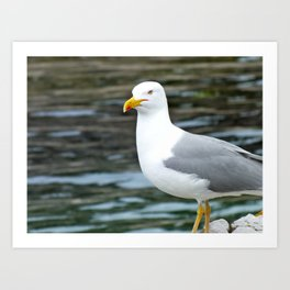 The Seagull Art Print