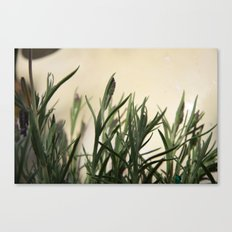 I hate lavender Canvas Print