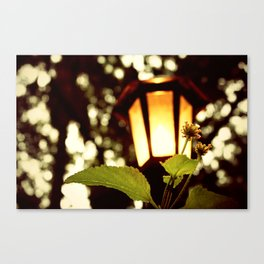 Tiny, but Fierce Canvas Print