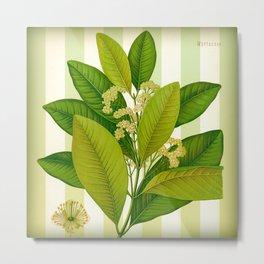 Myrtaceae Metal Print