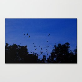 Night flight of the birds in the forest Canvas Print