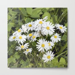 COMMON DAISY  Metal Print