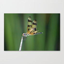 Orange Dragon Fly Canvas Print