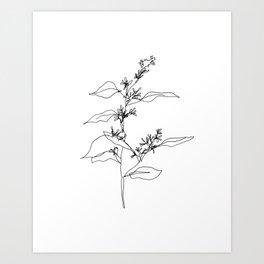 Seeded Eucalyptus — Minimal Botanical Line Drawing Art Print