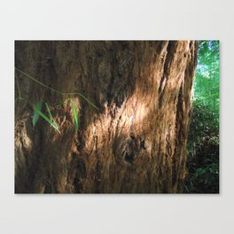 New and Ancient Canvas Print