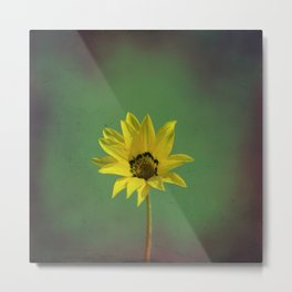 The yellow flower of my old friend Metal Print