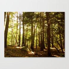 Woodland Serenity Canvas Print