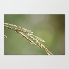 Nature In April - 1 Canvas Print