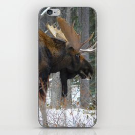 Massive male moose on the loose in Jasper National Park iPhone Skin