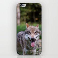 Canis Lupus Lupus III iPhone Skin