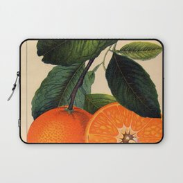 VINTAGE ORANGES ENCYCLOPAEDIA BOTANICAL PRINT Laptop Sleeve