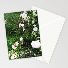 chintz Stationery Cards