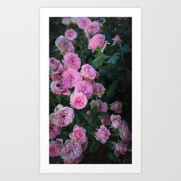 Vintage Pink Roses Art Print