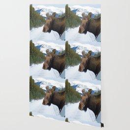 Beautiful Moose in Jasper National Park Wallpaper