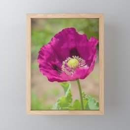 Violet Vision by Reay of Light Photography Framed Mini Art Print