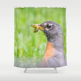 Female american robin Shower Curtain