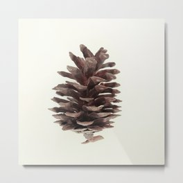 pine cone Metal Print