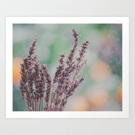 Lavender by the window Art Print