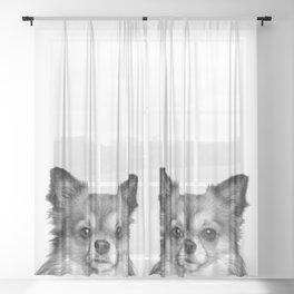Black and White Chihuahua Sheer Curtain
