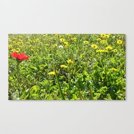 Sunny Grass Canvas Print