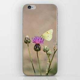Clouded Yellow Butterfly iPhone Skin