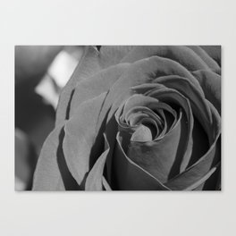 Charcoal Red Rose Canvas Print