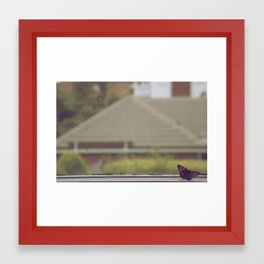 Bugs Are Beautiful Framed Art Print