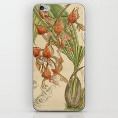 Gongora latisepala iPhone & iPod Skin