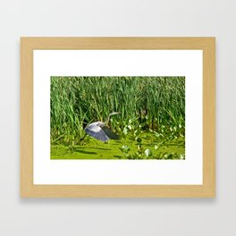 Great Blue Heron Takes Flight Framed Art Print