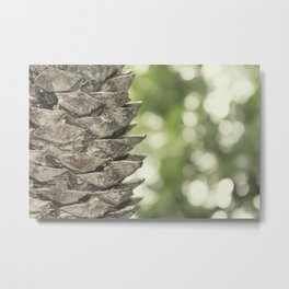 pinecone. Metal Print