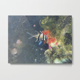 Aquarium Shot Metal Print