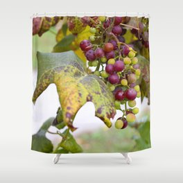 Green and purple grapes on the vine Shower Curtain