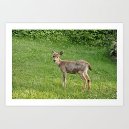 Young buck on the lawn 10 Art Print