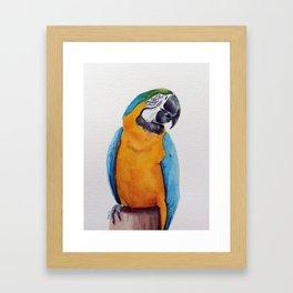 Macaw II Framed Art Print