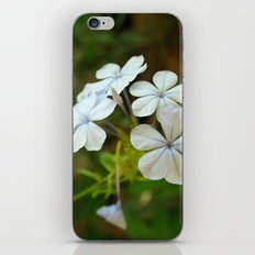 White little flower iPhone & iPod Skin