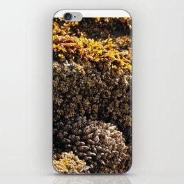 Barnacles on the Beach iPhone Skin