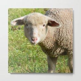 Lamb Closeup in the Vineyard Metal Print