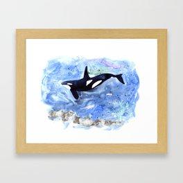 Loose Orca watercolor painting Framed Art Print