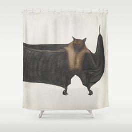 Vintage Indian Fruit Bat Illustration (1782) Shower Curtain
