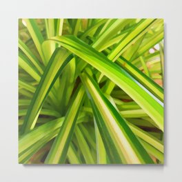 Spider Plant Leaves Metal Print