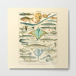 Vintage Fishing Diagram // Poissons II by Adolphe Millot 19th Century Science Textbook Artwork Metal Print
