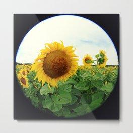 Sunflower 14 Metal Print