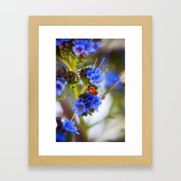 Fly Away Home Framed Art Print